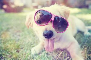 puppysunglasses