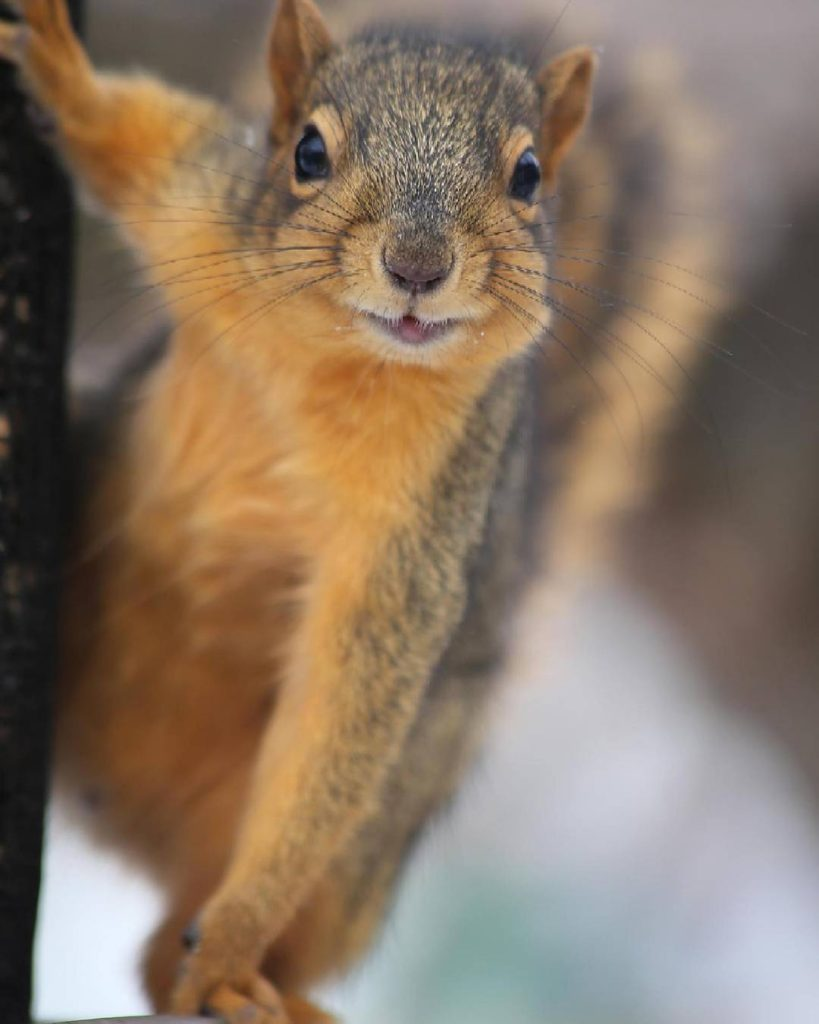 This squirrel has nothing to do with the mixed experiencehellip