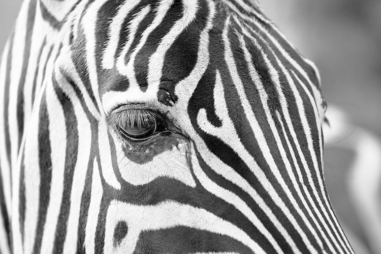 Maybe its just me but I dont mind using zebrahellip